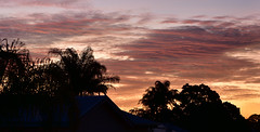 Tequila sunset (Images by Jeff - from the sea) Tags: nikon d7200 dusk sunset tamron twilight tamronsp2470mmf28divcusd pinksunset palmtrees redsunset clouds bluesky bundaberg 2470mm 2016 nikonpassion topf25 500v20f