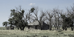 No Title (unknown quantity) Tags: abandonedhouse outbuilding deterioration deadtrees cloud pasture horizon brokenroof weathered neglect collapse