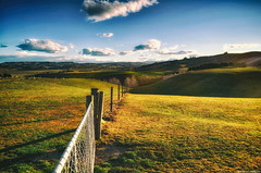 Over the Hills and Far Away (Kevin_Jeffries) Tags: light colour newzealand canterbury sheep gold green nikon d90 rural farm pasture jeffries nature sky cloud hill mountain foothill fenceline fence blue yellow new