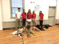 Calvin, Aslan, Bailey, Rika, & Ryan at Red Cross HQ in Silver Spring (hero dogs) Tags: dog labrador cute therapydog servicedog