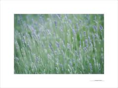 Los paisajes mnimos (E. Pardo) Tags: paisajesminmos flores flowers blumen colores colors farben steiermark austria