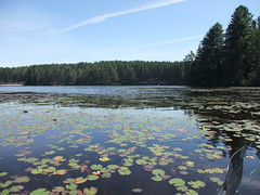 Paddling through lilies (Mark of Oz) Tags: algonquin park ontario canada pog lake kayaking waterlillies
