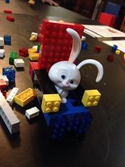 Cadeira providenciada, coelho feliz! (Assim espero.) :/ (gomides1) Tags: coelho bunny mondrian snowball