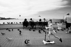 (nVa17) Tags: stphotographia sevastopol blacksea sea water crimea girl strangers child citylife dove pigeon embankment september         street streetphotography streetphoto blackandwhite blackwhite blackandwhitephotography bnw bw