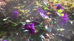 Back Yard (mrrobertwade (wadey)) Tags: wadeyphotos mrrobertwade rossendale robertwade lancashire haslingden milltown