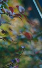 DSC_0332 (criscrot) Tags: nancy lorraine d200 parcsaintemarie bokeh 50mm18 automne autumn buisson