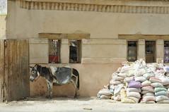 Donkey life (Wolfgang Kalb) Tags: morocco marokko fs fes donkey fez