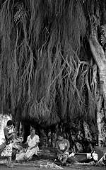 Tannese Women Giant Banyan Tree Shade Tanna Island Vanuatu Melanesia Oceania Pacific Ocean (eriagn) Tags: lenakel tannaisland vanuatu pacificocean sea ocean people woman portrait peanuts baskets shade trader selling woven weaving building fuel fuelstation petrol newzealand hat floral dress township port ngairehart eriagn travel photography landscape destination ethnic tribal melanesia tree roots aerialroots texture huge enormous spreading tropical forest ferns tannaadventures esso nima scenic unspoiled friendly tannese life kaluas kaluasbanyantree chinesebanyan nepuk essoandrebecca kastom blackandwhite monochrome outdoor banyantree women talking waiting
