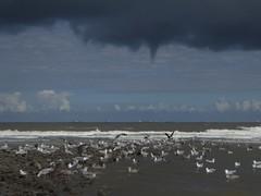 Wangerooge beach, dark clouds with a sprout (Alta alatis patent) Tags: wangerooge beach gulls sprout dark sea northsea