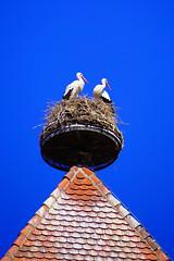 Storks (Alsace) (Marco Braun) Tags: alsace elsass storch strche cygogne cygognes dach roof france frankreich stork