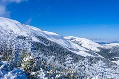 Harry_30842,,,,,,,,,,,,,,,,,,,,,,,,Hehuan Mountain,Taroko National Park,Snow,Winter (HarryTaiwan) Tags:                        hehuanmountain tarokonationalpark snow winter mountain     harryhuang   taiwan nikon d800 hgf78354ms35hinetnet adobergb