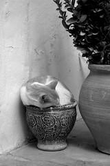 MANGATA. Camino de la luz de la luna que se refleja en el mar. (Lucia Corts Tarrag) Tags: cat gato miau canon canon100d ibiza eivissa bw amorseescribeconh culture plantas relaz terapy