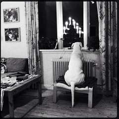 Vito, on guard tonight (Grymfoting) Tags: thelittledoglaughed ldlnoir