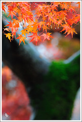 20121126_6576a_ (Redhat/) Tags: autumn fall japan temple maple kyoto redhat              sinnyodo