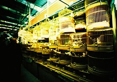 Bird cages (Roon & Beks) Tags: china colour lomo xpro lomography cross shanghai chrome elite processed extra ebx
