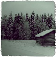 Driving home for Christmas (TinaOo) Tags: christmas snow barn forrest sweden skog sverige jul snö lada jämtland