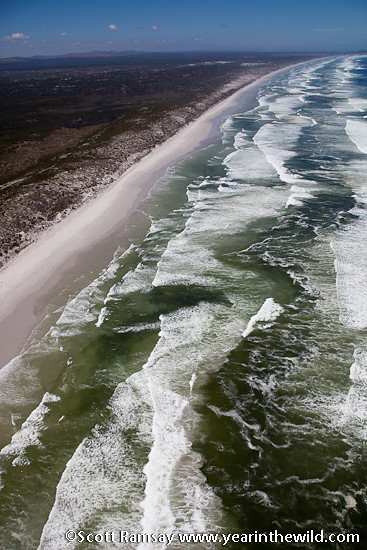 West Coast National Park - Western Cape - South Africa