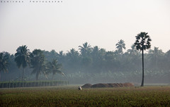 Early morning village beauty :) (Kanishka **) Tags: morning fog canon early smog village andhra kanishka 550d