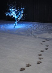 For the Dog (dlholt) Tags: christmas blue winter dog snow night tracks christmaslights paws