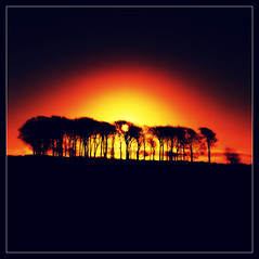 A New Year, a New Dawn .... anything's possible (david.hayes77) Tags: uk trees 6x6 silhouette sunrise derbyshire peakdistrict hasselblad velvia contrajour arborlow hass500