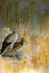 IMG_1010-and-bird (Lins Art) Tags: bird neophron texturedbackground egyptianeagle naturlistlibrarybook
