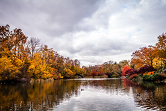 Central Park In Fall (Mabry Campbell) Tags: nyc newyorkcity november autumn trees usa ny newyork reflection nature water colors leaves yellow reflections landscape photography us photo colorful cityscape unitedstates centralpark manhattan fallcolors unitedstatesofamerica autumncolors photograph fallen 400 24mm f56 2012 newyorkcounty tse24mmf35l nycphotowalk nycworkshop sec mabrycampbell november132012 201211138973