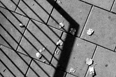 2012-1014-12-06-34 (t-a-i) Tags: uk autumn shadow england london leaves grid unitedkingdom   grd3 grdigital3