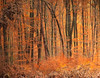 Autumn Forest (Habub3) Tags: wood travel autumn trees holiday plant fall nature colors leaves forest canon germany deutschland search reisen flora europa europe stuttgart urlaub herbst natur powershot wald baum vacanze farben g12 rotenberg serach 2013 habub3
