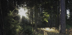 Star Trekking (djshoo) Tags: longexposure forest lowlight woods nikon lincolnshire wideanglelens d90 sigma1020 staplefordwoods