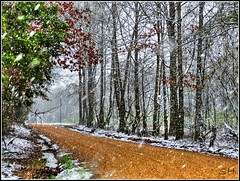 Snow (Suzanham) Tags: winter snow forest landscape thegalaxy intouchwithnature trolled snoscape absolutelyperrrfect