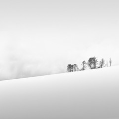 whispers of winter, 2010 (p r i m e r) Tags: trees snow 2010