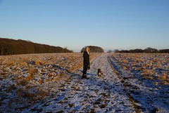 Out for a walk in Dyrehaven (osto) Tags: woman dog pet animal denmark europa europe sony terrier zealand tina dslr scandinavia danmark cairnterrier dyrehaven lyngby a300 eremitagen sjlland  osto alpha300 osto february2013