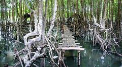 peam krasaop (ramsch_ursel) Tags: lumix cambodia kambodscha kayak walk wildlife panasonic kong mangrove kung koh sanctuary krong peam mangroven boeng kaoh lx2 kôh kâmpŭchéa kŏng krasaop krasop bankajak