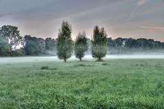Nebel ber den Feldern (G_Albrecht) Tags: agrar baum bodennebel genre hdr landschaft morgennebel nebel pflanze umwelt vermerk wetter