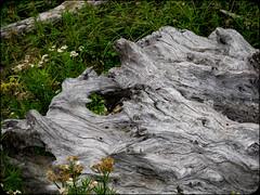 Driftwood (adolgov) Tags: california mendocino ocean pacificcoasthighway pch pacificocean
