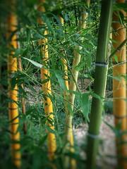Rip Van Winkle Gardens Jefferson Island Louisiana Antebellum Home Mansion History 90002G (Dallas Photoworks) Tags: rip van winkle gardens jefferson island louisiana subtropical lush