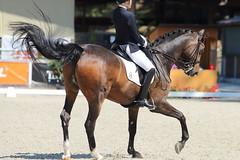 IMG_7736 (dreiwn) Tags: dressage dressur dressuur pferd reitturnier turnierreiten pferdesport horse horseback horseriding equestrian reitverein dressurprfung kandare doublebridle reiten pferde reitplatz ridingarena