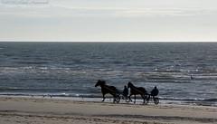 Belgian coast (Natali Antonovich) Tags: belgiancoast northsea sea water parallels portrait horse horses horseman horsemen wenduine seasideresort seashore seaboard seaside beach