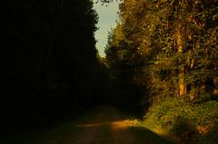 The Path to Dusk (Kristian Francke) Tags: road path sunset dusk gold golden green plant plants grass tree trees cottonwood black maple landscape pentax helios zenit 44k4 f28 outside rural light