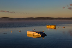 The sun shines thru (Images by Ann Clarke) Tags: seagulls birds boats clearskies cold sunrise tulka