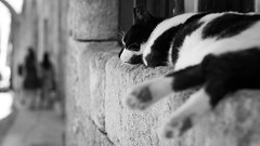 A cat's life (Thomas Demeulemeester) Tags: dem bn bokeh cat dof femmes heat nb noiretblanc rhodes rodos silhouettes women blancoynegro bnw byn calledeloscaballeros calor canon600d chaleur chat day diasoleado ef50mmf18ii holidays journe journeensoleille laziness mujeres mur oldtown paresse pereza ruedeschevaliers siluetas streetofknights streetphotography summer sunnyday vacaciones vacances verano vieilleville wall t