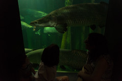 Acuario Agosto 2016 (61) (Fernando Soguero) Tags: acuario zaragoza acuariodezaragoza aragn turismo aquarium nikon d5000 fsoguero fernandosoguero