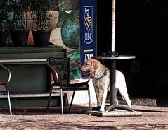... (Jean S..) Tags: outdoor dog animal table chair sidewalk urban city