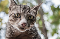 Curiosit (johan masia) Tags: chat cat gatto portrait ritratto animal animale nature natura nikon d90 1770 travel voyage viaggio viaje journey bokeh colore color colour couleur ngc