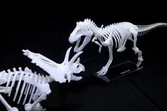 IMG_6876 (Barman76) Tags: bonelab trex tyrannosaur skeleton plastic laser cut