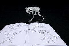 IMG_6866 (Barman76) Tags: bonelab trex tyrannosaur skeleton plastic laser cut
