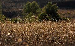 Tripudio (lincerosso) Tags: praterie pratiaridi maremmagrossetana estate luce pomeriggio bellezza armonia complessit