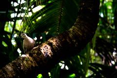 getting a little sun (-gregg-) Tags: shadows sun bird palm trees garden