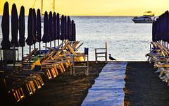 summer is over ... (miriam ulivi) Tags: miriamulivi nikond3200 italia liguria sestrilevante spiaggia beach tramonto sunset ombrelloni umbrellas deckchairs lettinidaspiaggia gabbiano seagull controluce yacht mare sea
