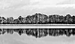 White Symphony of Winter Lake  by Silva Wischeropp aka Silva Capitana (SILVA CAPITANA) Tags: winter lake walk trees reflection abstract balckandwhite black white grey water nature wintertime fineart mirror watermirror waterreflection abstraction monochromelandscape mono monochrome lines plants meadow grass dream surreal surealism surreallandscape dreamfulnature winterdream winterwalk newyear germany europe aquaticdream ambient